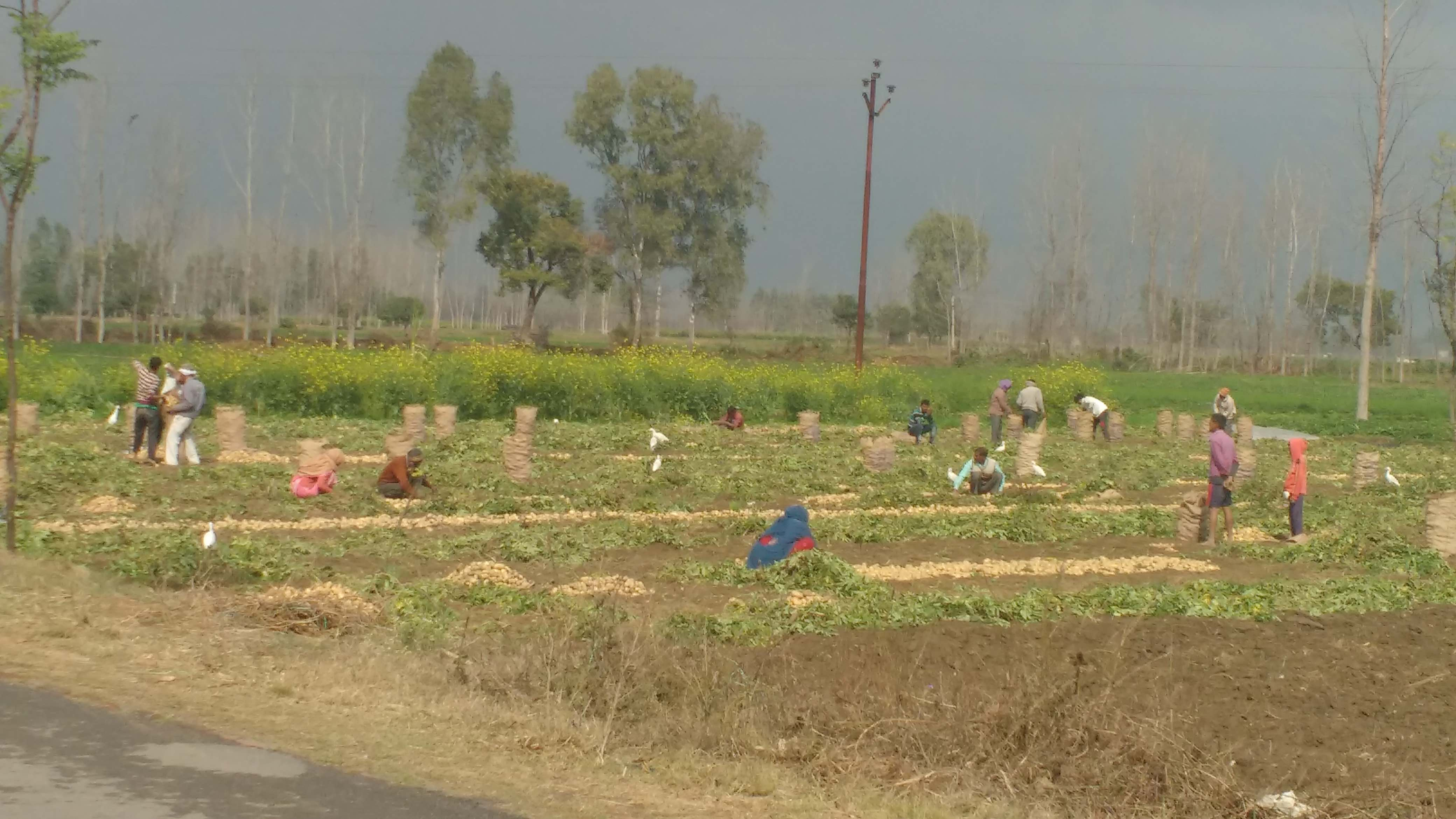 Why a Loan Waiver Is Far From Enough to Solve UP's Agricultural Crisis
